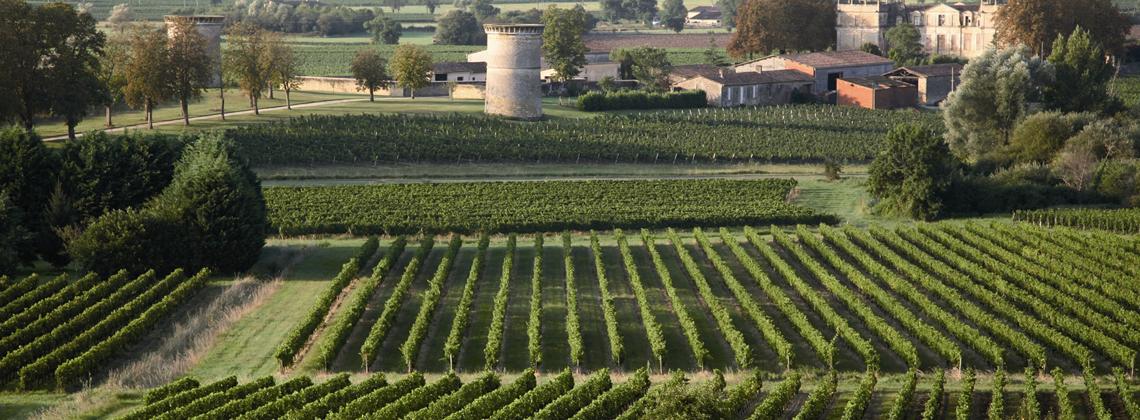 Un été au milieu des vignes….