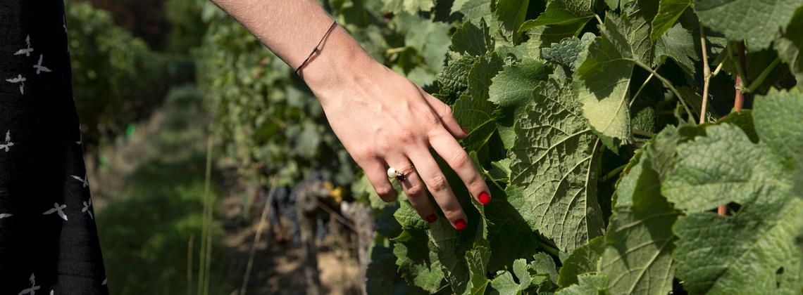 Rencontre avec 3 viticultrices passionnées.