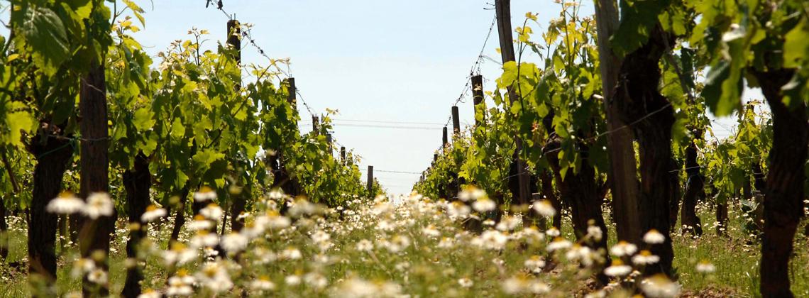 L'engagement de toute une filière, de la vigne aux consommateurs