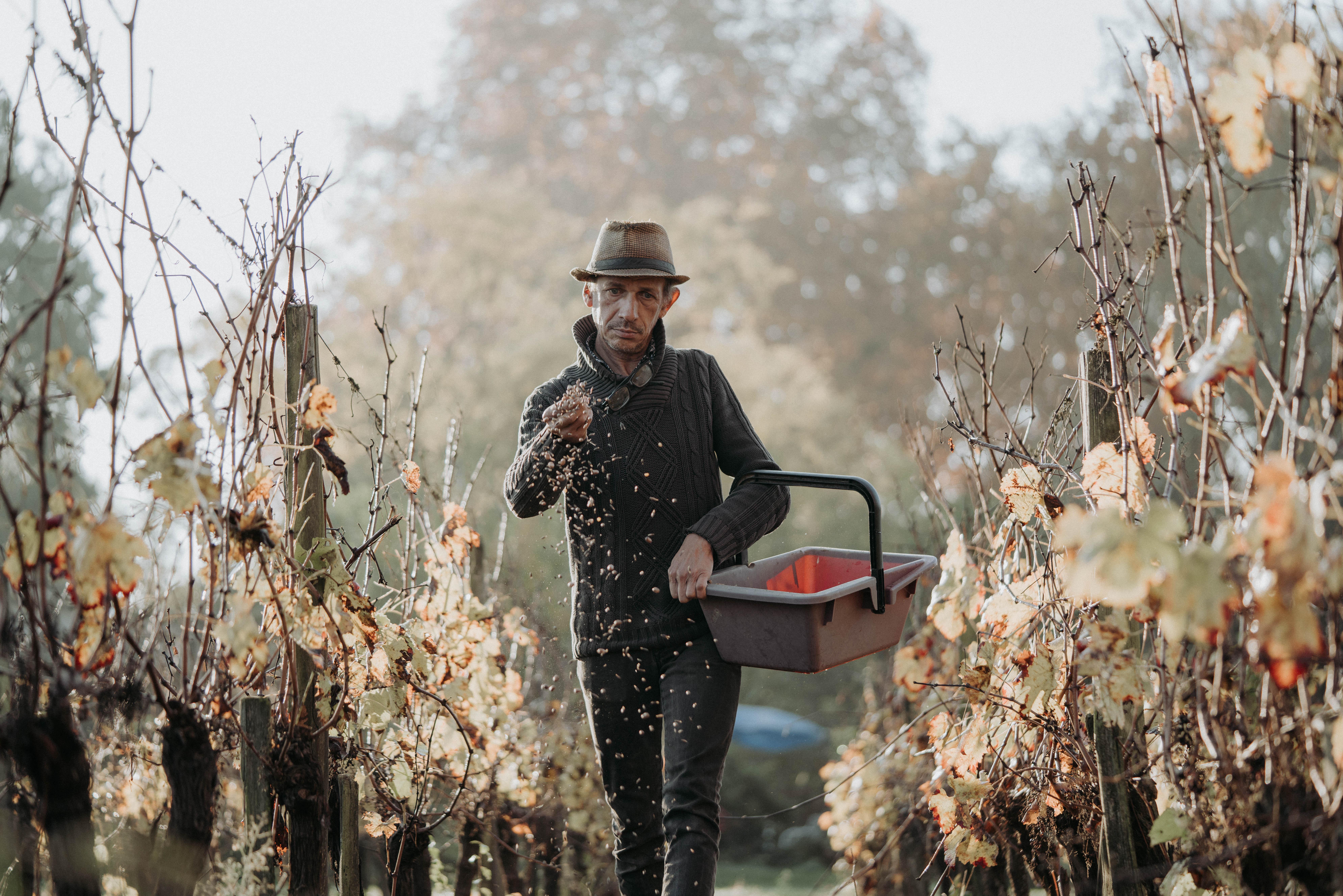 wijnboer wijnmaker hoed wijngaard
