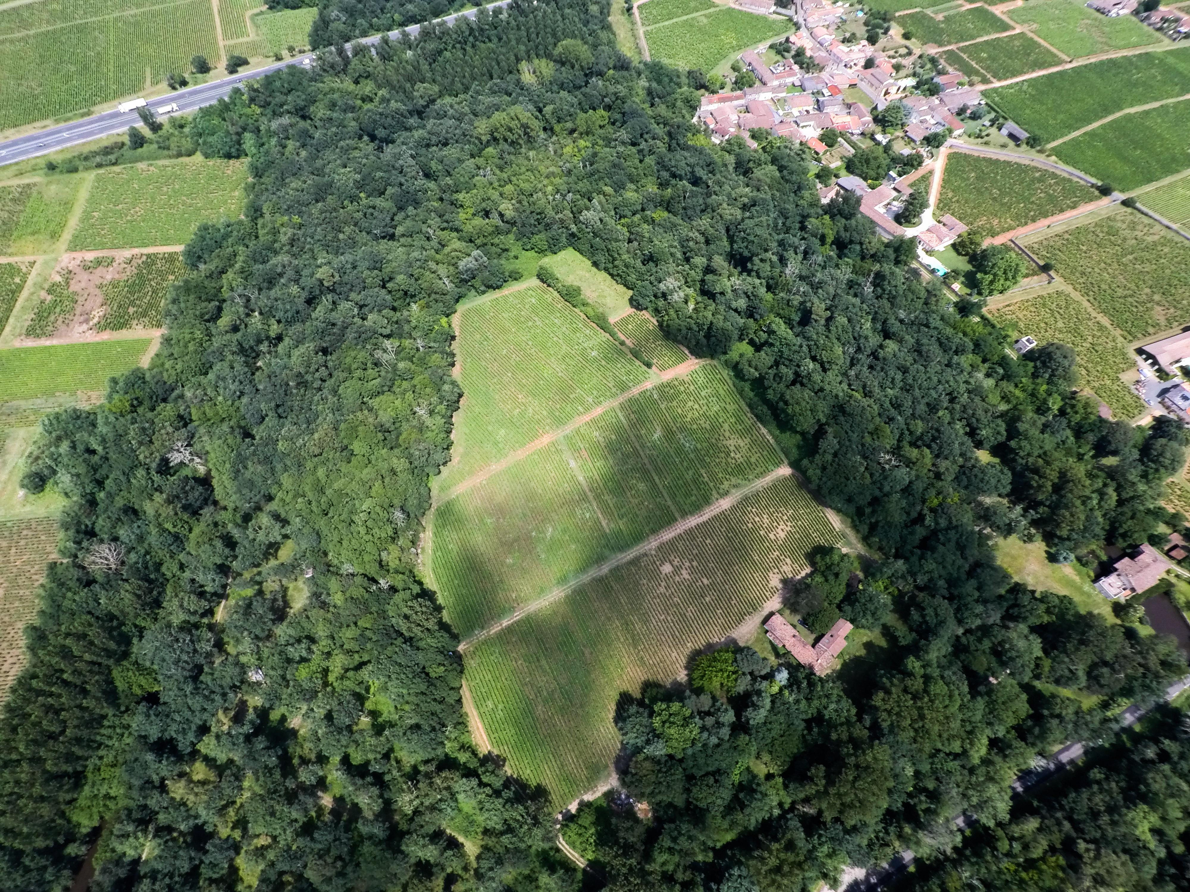 drone vignoble nature