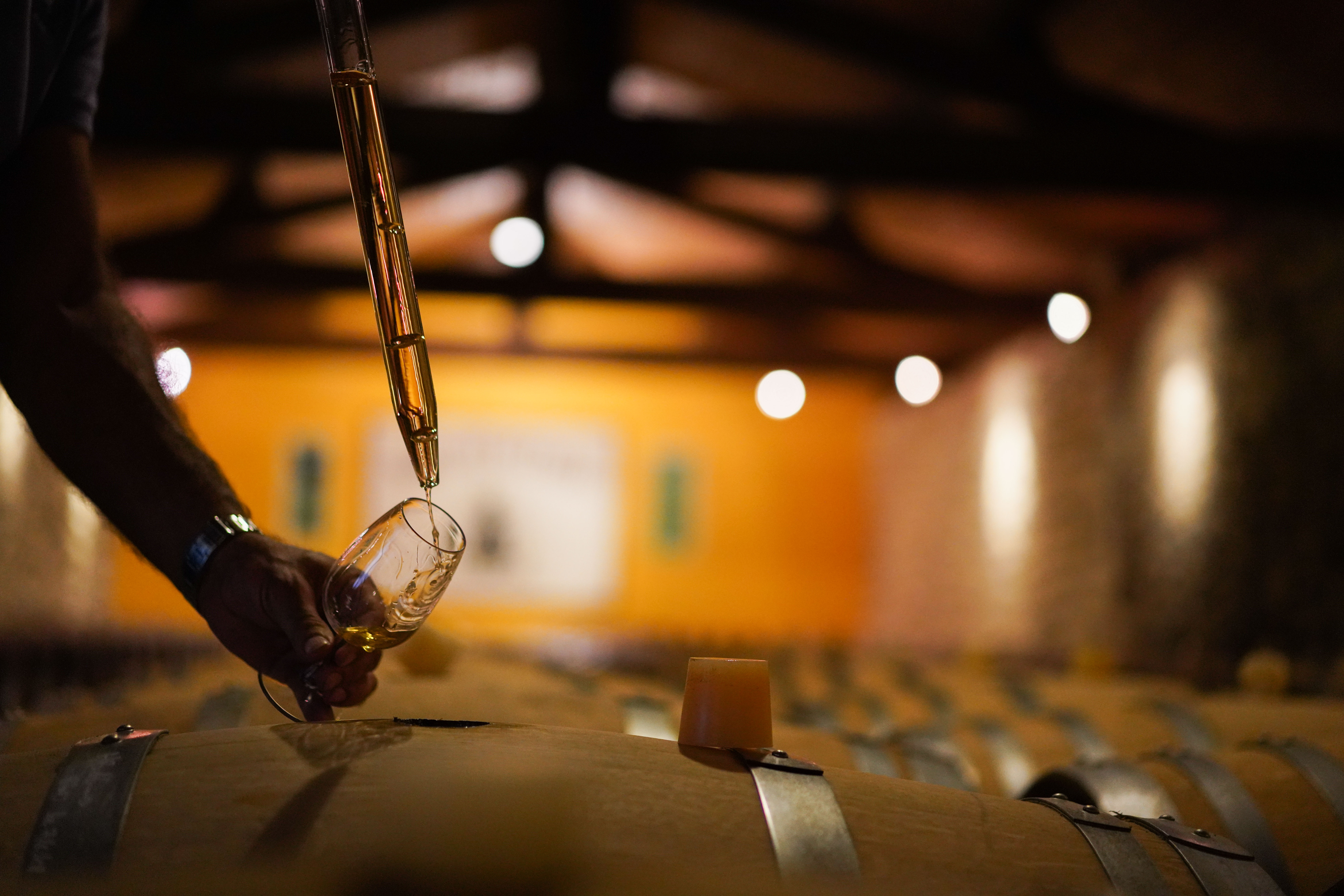 vin dégustation cave