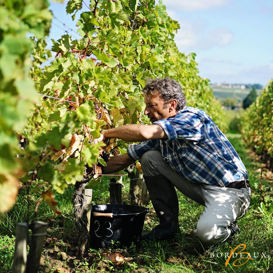 wijnmaker wijngaard biologisch