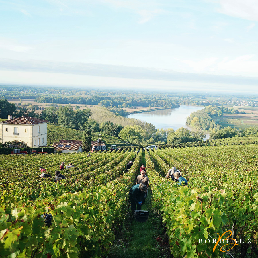 wijngaard wijnmaker biologisch