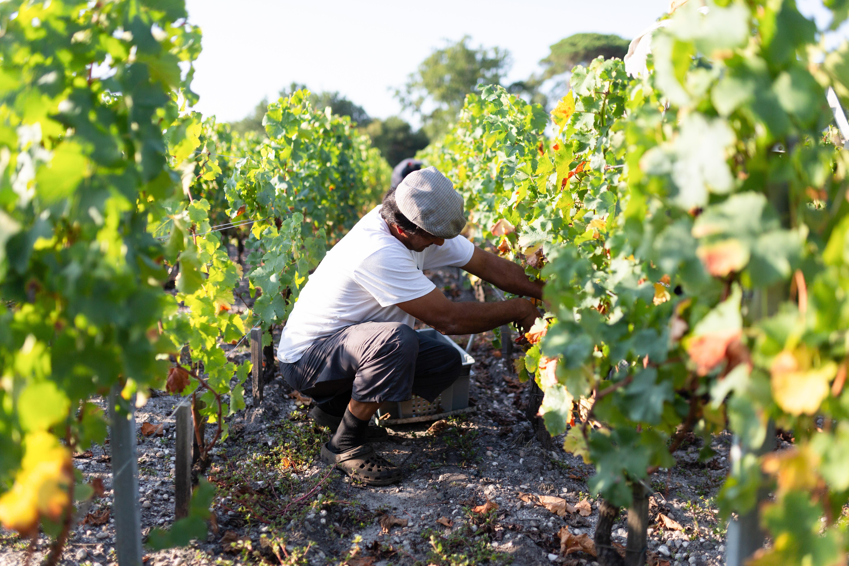 vignoble vins millésime